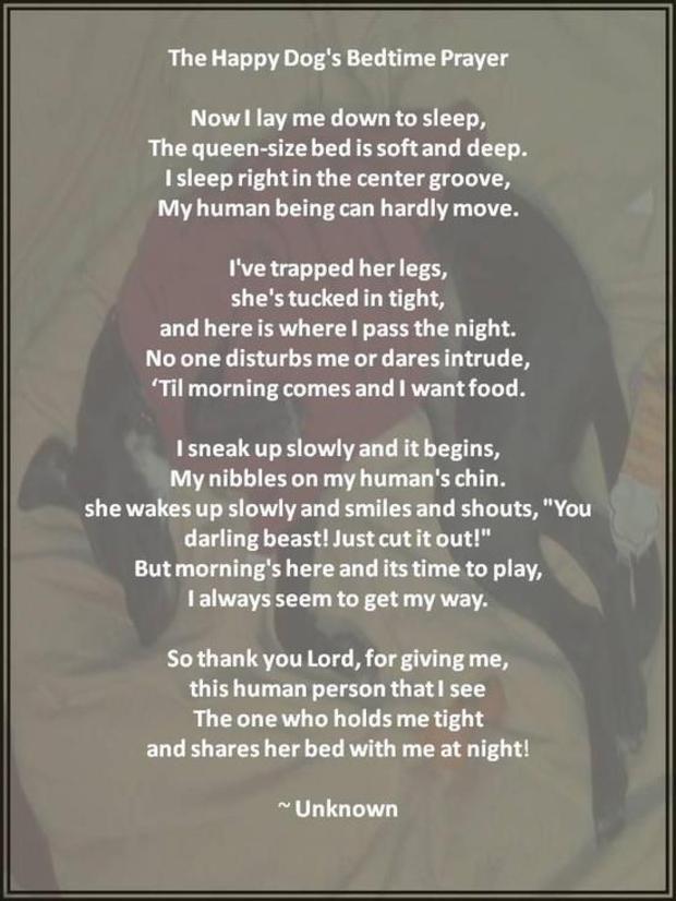 A Dog S Bedtime Prayer Video